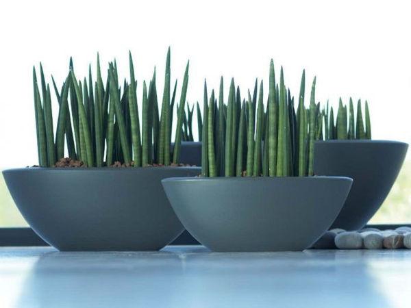 #BMdecor | Plantas para ambientes internos por Racheli Mari