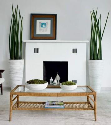 Plantas para ambientes internos por Racheli Mari